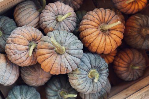 pumpkins_t20_9eRR08
